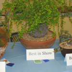 best-in-show-2012-2