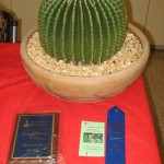 best-cactus-novice-robert-kopfstein